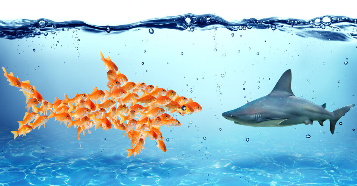 concept of fish depicting stakeholder consultation